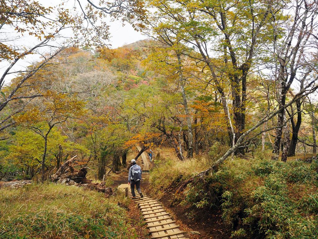 秋色の塔ノ岳